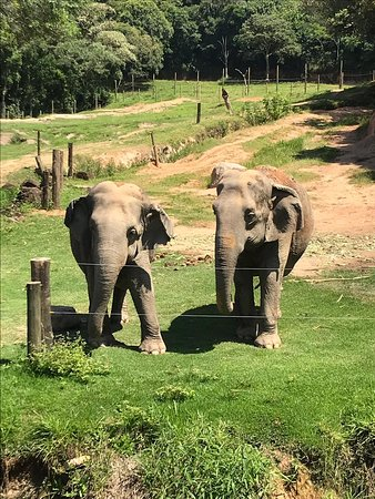 Itatiba, SP: Sessão de alimentação dos elefantes