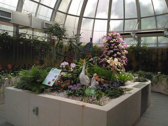 Hong Kong Zoological and Botanical Gardens: Inside a botanical dome.