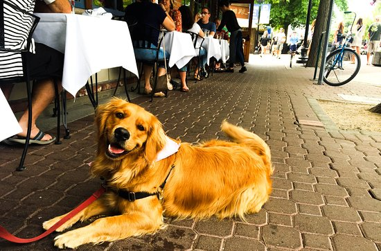900 Wall: Dog friendly patio