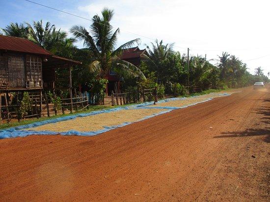 Sechage du riz sur la route menant a Tonle Sap et donc au village de Kompong Khleand