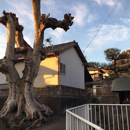 ฟูจิ, ญี่ปุ่น: おしゃもっさん