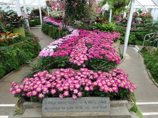 Beautiful, bright colours at the Whanganui Winter Gardens