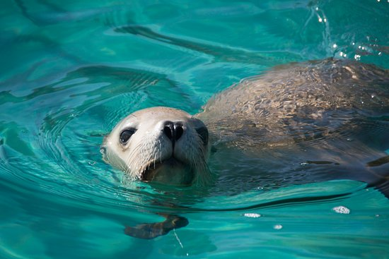 Half-Day Sea Lion Snorkeling Tour from Port Lincoln: waiting for us to come into the water