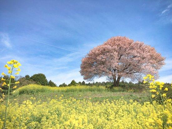 周辺には桜の名所がたくさんあります
