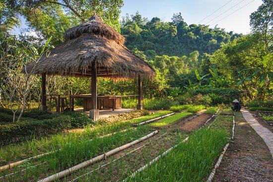 Muang La Lodge: Garden