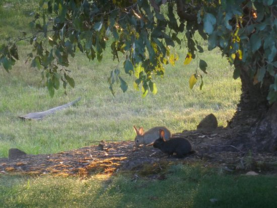 """Country Club Villas: Keep an eye out for early morning """"golfers"""""""