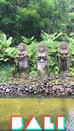 حديقة القرود بالي اوبود