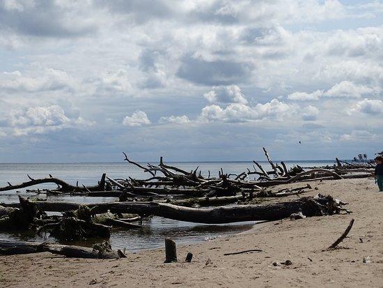 Kolka, Latvia: Латвия. Мыс Рижского  залива ( мыс Колка)