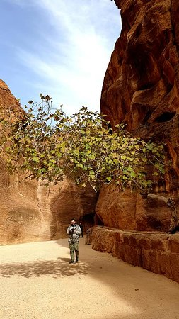 Day Tour to Petra from Eilat: Petra's canyon