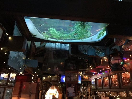 Curious fish tank in the ceiling! - Picture of Turk's, Dana