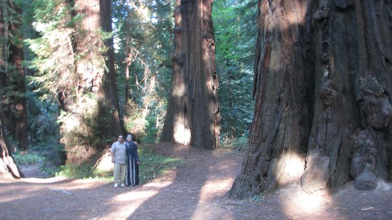 Humboldt County, CA: Ave of the giants