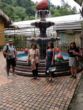 Mr. Aaron and family day tour to Genting Highlands Strawberry Farms