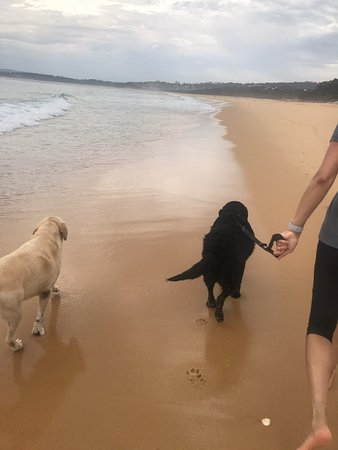 Dogs loved Tura Beach. Beautiful golden sand, very peaceful and clean.