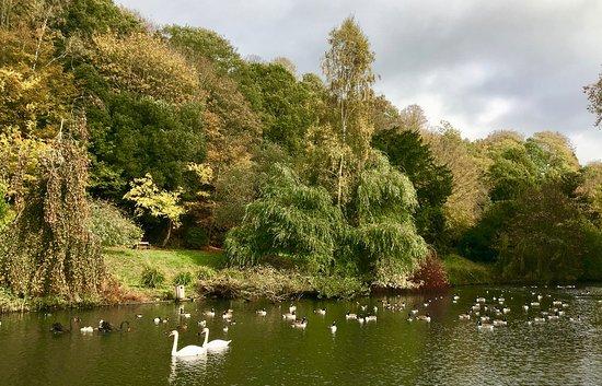 Busbridge, UK: Busbridge Lakes