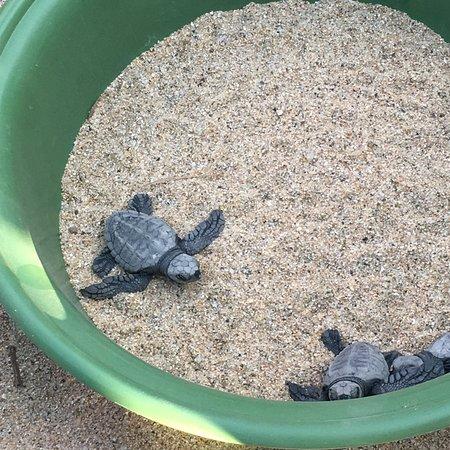 Ótima opção de passeio para observar a soltura de tartarugas e conhecer um pouco mais sobre esses animais incríveis . Sugiro chegar no horário programado pois costumam serem pontuais