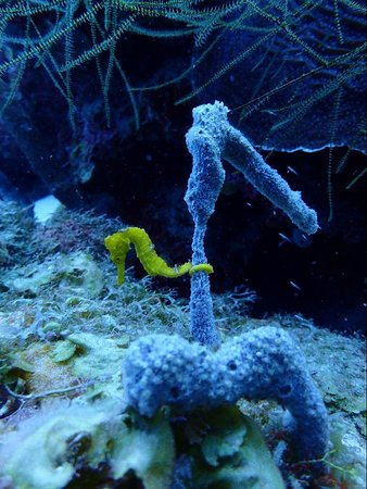 Seahorse can change color!