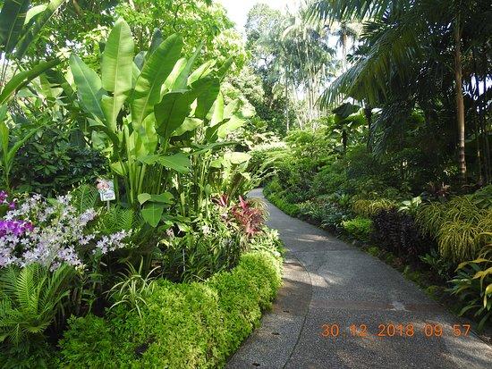 Stunning beautiful National Orchid Garden
