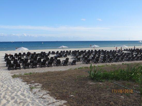 New Beach Area, Ya Think Palm Trees Will Arrive....I Do