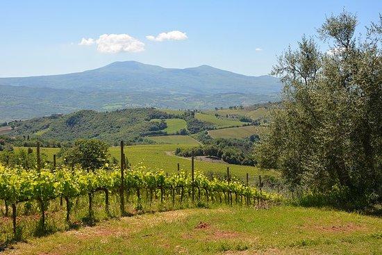 Montalcino Weintour - donnerstags von...