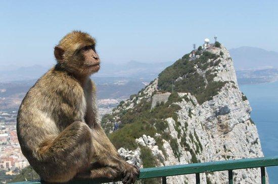 Gibraltar Dagstur med Shopping fra...