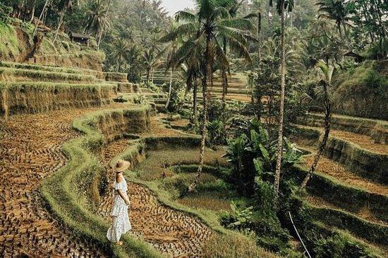 Magisk Ubud Rice Terrace Tour