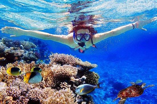 Bali Menjangan Island Snorkeling Day...