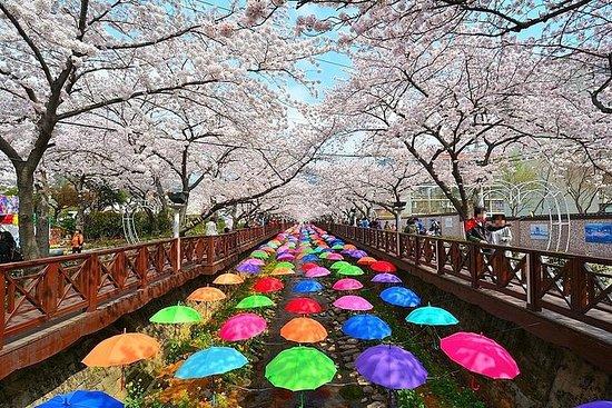 Jinhae Cherry blossom Festival Dia...