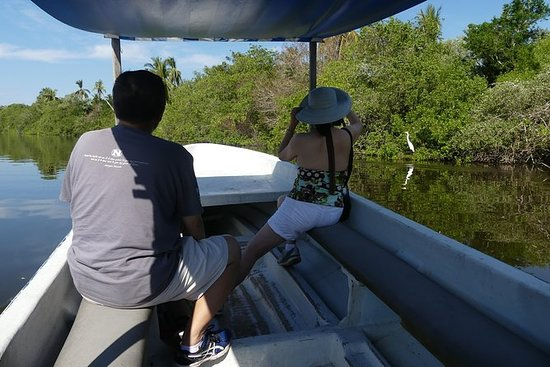 3 Palos Lagoon Jungle Tour Baby...