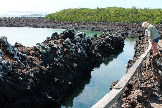Isabela Island Explorer 3 dias 2...
