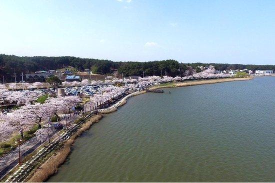 Gyeongpodae Cherry Blossom Festival