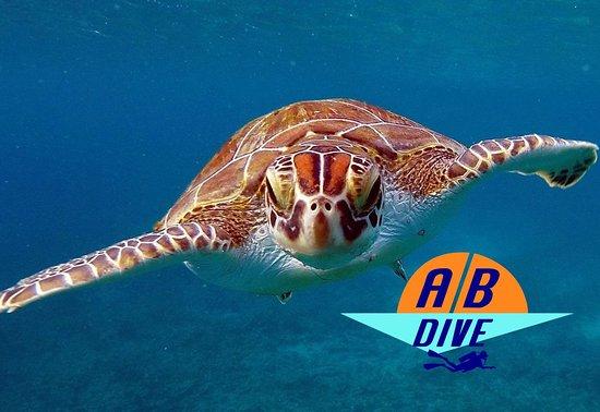 AB-Dive