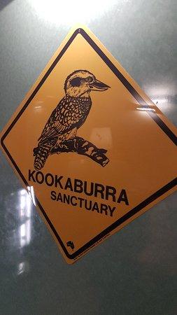 Kookaburra Die Eisvögel