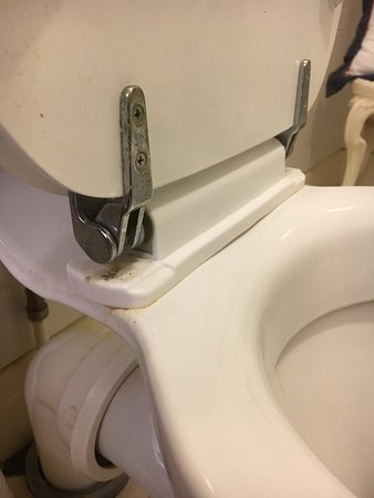 Pen-y Bryn Guest House: Grime around toilet seat hinges.