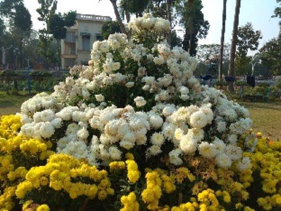 Kalküta, Hindistan: Rabindra Bharati University, Kolkata, India. Flowers all around.