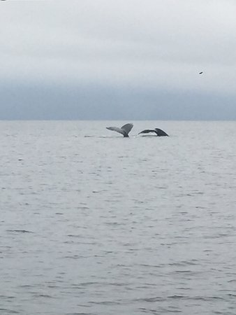 Führung mit Walbeobachtung ab Granville Island in Vancouver: A double tail flip. The naturalist felt it might be a mother and baby and identified one of the whales as Snoopy from the markings on the tail.