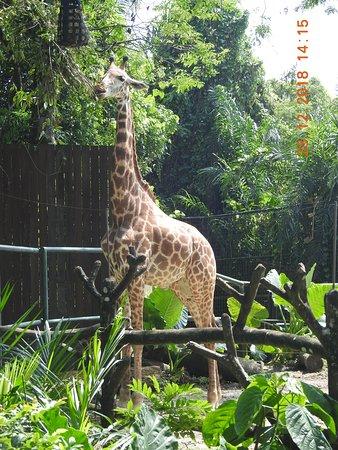 Giraffe zone
