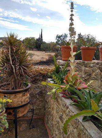 Great looking garden.