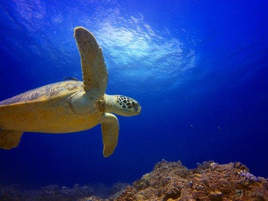Blue Bay Divers Diving Centre