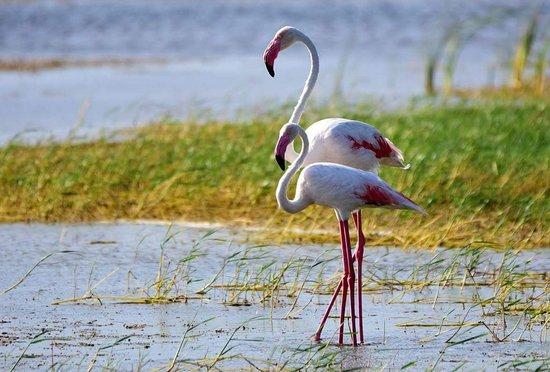 Bundala birds paradise