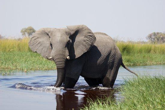 Temogo Safari