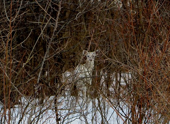 Deer Haven Park : He thinks we can't see him