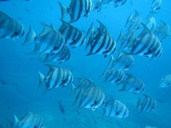 Santa Catalina, Panama: Diving Coiba
