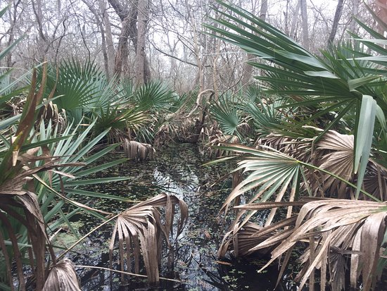 Palmetto State Park Gonzales All You Need To Know
