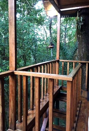 Tree Houses Hotel Costa Rica : A view from the Toucan House Deck
