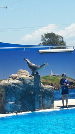 Pet Porpoise Pool - Dolphin Marine Magic (Coffs Harbour ...