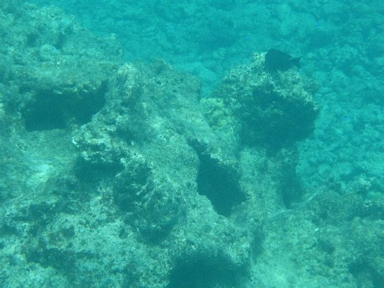 Dead coral composes most of the Navini house reef.