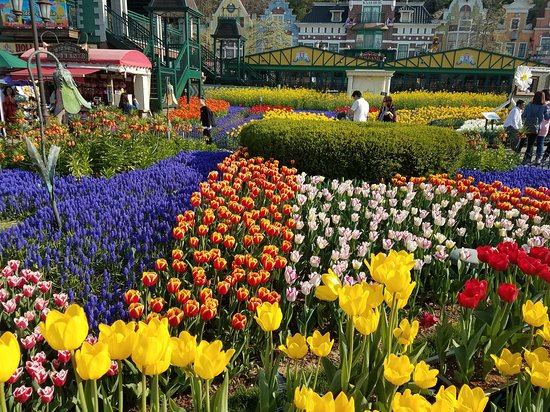 A Must Go Attraction In Korea Review Of Everland Yongin South Korea Tripadvisor