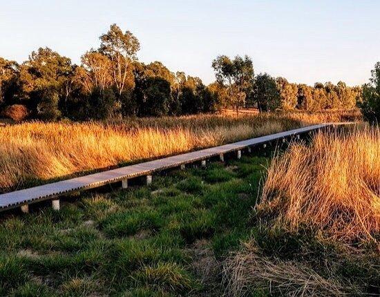 Junee Urban Wetland