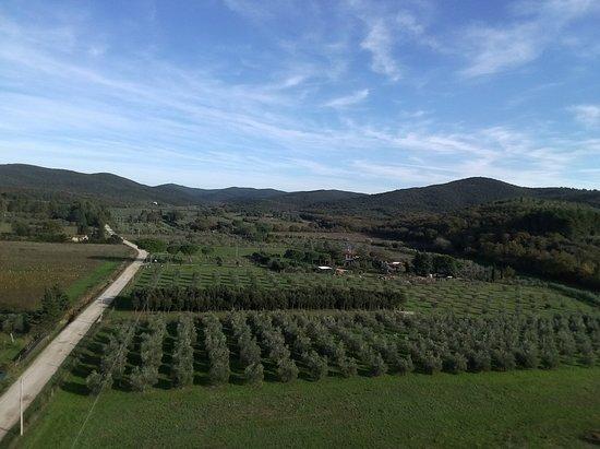 Riotorto, Italie: Azienda Agricola Micol Carraro