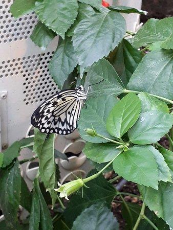 kelebekler her yerde